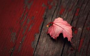 Картинка макро, краска, текстура, доска, красный лист