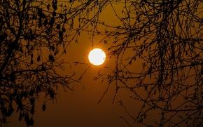 Картинка озеро, небо, солнце, деревья, ветки, закат
