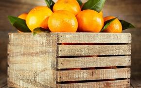 Обои ящик, фрукты, апельсины