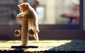 Обои кошка, котенок, ковер, игрушка, играет, солнечные лучи, Ben Torode, Hannah
