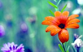 Картинка цветок, цвета, colors, лепестки, colorful, flower, дикие, красочные, petals, wild