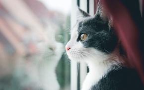 Картинка кот, усы, кошак, окно, смотрит, котяра