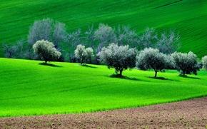 Картинка поле, трава, деревья, холмы, весна