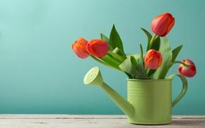 Обои цветы, лейка, стол, фон, красные, зеленая, тюльпаны