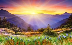 Обои цветы, ель, горы, природа, деревья, травка, луг, пейзаж