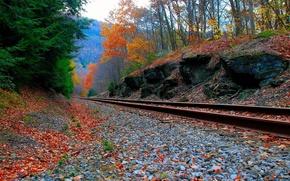 Обои Лес, железная, Осень, Дорога