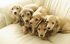 Картинка собаки, щенки, друзья
