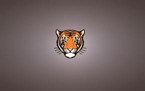 Картинка морда, тигр, минимализм, голова, серьезный, tiger, усатый