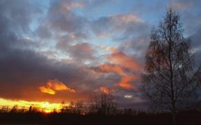 Картинка небо, солнце, облака, деревья, закат, береза
