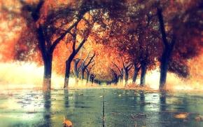 Обои осень, город, цвет, урица