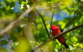 Картинка листья, деревья, птица, цвет, ветка, перья, клюв