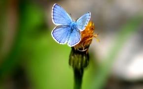 Картинка зелень, цветок, Бабочка