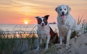 Картинка песок, море, собаки, закат
