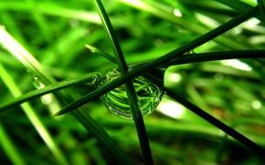 Обои макро, трава, капля