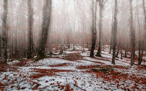 Картинка осень, лес, снег