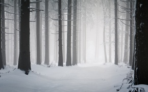 Картинка дороги, снег, снегопад, холод, зима, мороз, деревья, дорога, стволы, дерево, winter wallpapers, просека, зимняя природа, ...