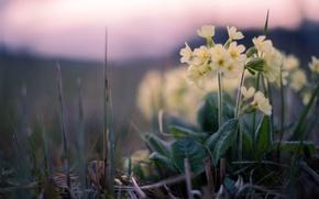 Картинка трава, закат, цветы