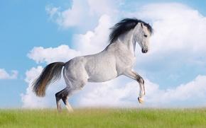 Картинка небо, трава, облака, лошадь