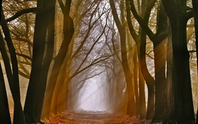 Обои лучи, свет, деревья, природа, аллея