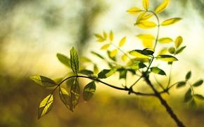 Картинка макро, зеленый, фон, обои, растение, размытие, листик, wallpaper, листочек, широкоформатные, листики, background, leaves, macro, полноэкранные, …