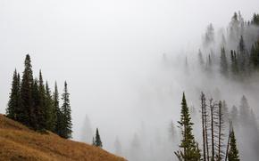 Картинка осень, лес, деревья, горы, туман, склон