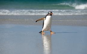 Картинка море, природа, пингвин, север
