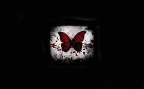 Картинка свет, бабочка, кровь, черный фон, пятно