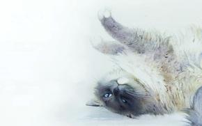 Картинка кошка, кот, картина, арт, акварель, лежит, потягивается