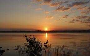 Картинка солнце, закат, озеро, птица, куст, вечер, цапля