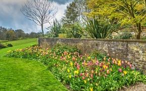 Картинка зелень, трава, деревья, цветы, Англия, сад, тюльпаны, кусты, Standen House and Garden