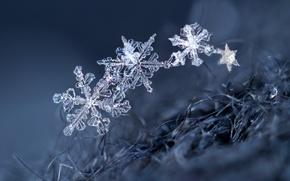 Картинка макро, снежинки, фон