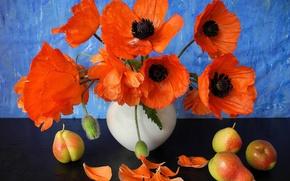 Картинка цветы, маки, лепестки, ваза, фрукты, натюрморт, груши