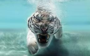 Картинка морда, животное, хищник, пасть, клыки, белый тигр, в воде