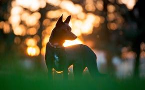 Картинка солнце, друг, собака, силуэт