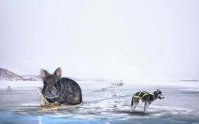 Картинка креатив, лёд, ситуация, собака, кролик, сани, хаски
