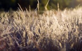 Картинка трава, растения