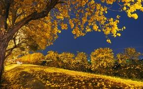Картинка осень, листья, свет, деревья, ночь, парк, скамья