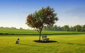 Картинка небо, трава, парк, дерево, газон, собака, весна, Май, лавка, Ted Van Pelt