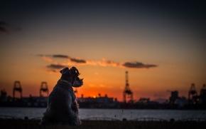 Картинка собака, река, закат