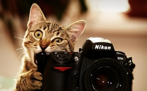 Обои фото, nikon, кот, котэ
