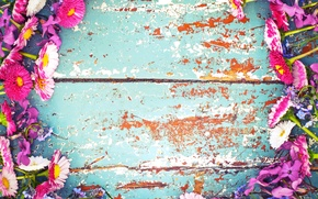 Картинка цветы, доски, краска, рамка, маргаритки