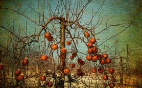 Картинка яблоки, сад, яблони