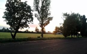 Картинка дорога, зелень, деревья, природа, Поле, Украина