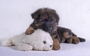 Картинка игрушка, щенок, овчарка, немецкая