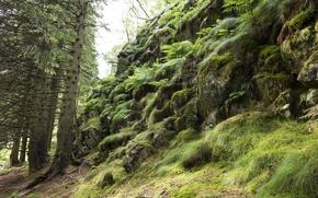 Картинка зелень, лес, деревья, природа, камни