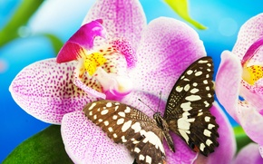 Картинка цветок, бабочка, орхидея, blossom, butterfly, Orchid