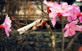 Картинка природа, весна, цветущая вишня, бумажка с пожеланиями