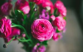 Картинка цветы, букет, лепестки, розовые, боке, Лютики