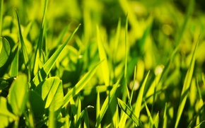 Картинка трава, солнце, свет, клевер