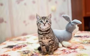 Обои котенок, игрушка, плюшевый заяц, by Lubov2001